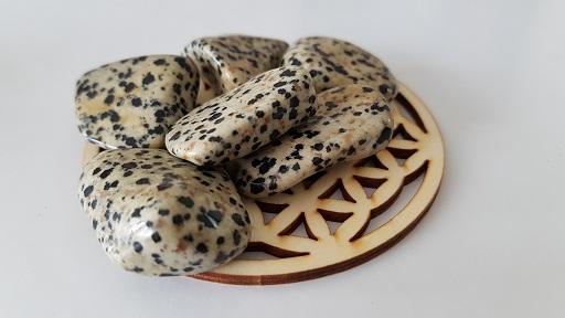 jaspe dalmatien ondorama bien etre taille 2